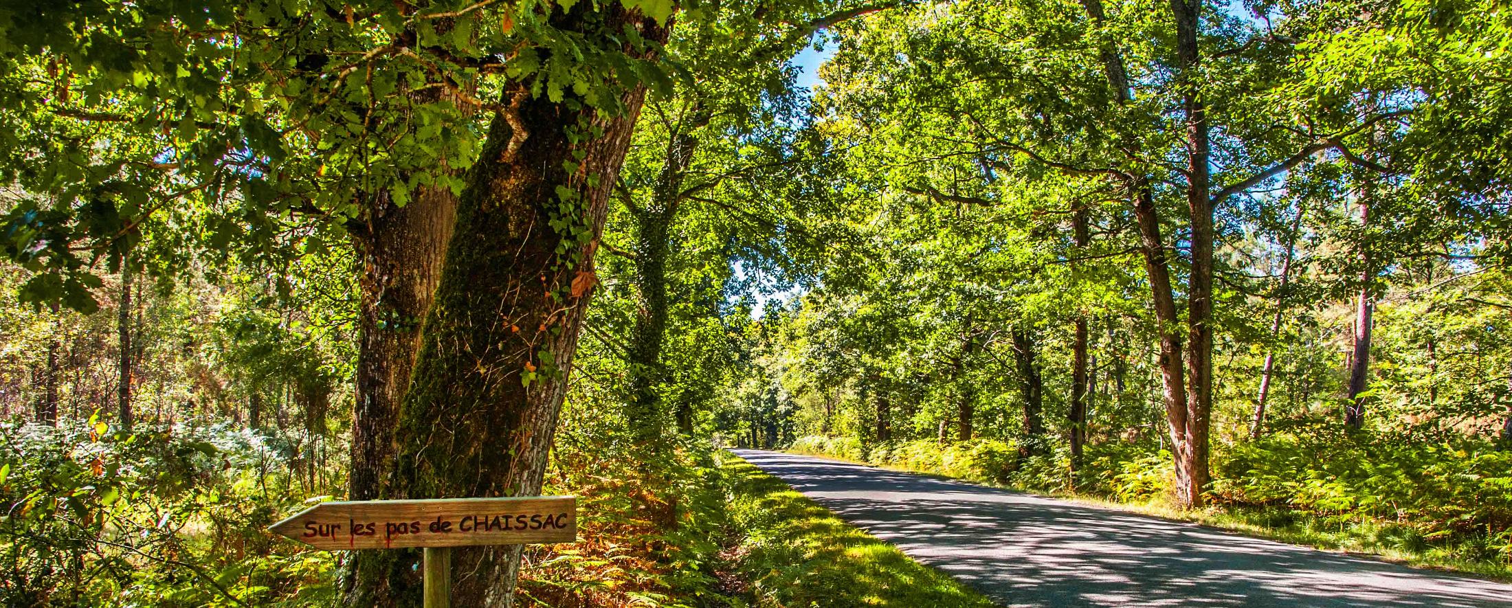 Bandeau – Forêt Sainte-Florence